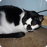 Adopt A Pet :: Stella - Salem, OR