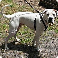 Adopt A Pet :: Glynn - Austin, AR