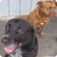 Adopt A Pet :: Bruno - Tahlequah, OK