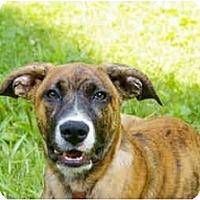 Adopt A Pet :: Posey - Jacksonville, FL