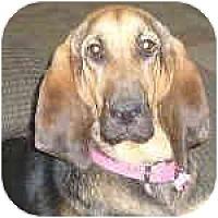Adopt A Pet :: Nutmeg - Phoenix, AZ