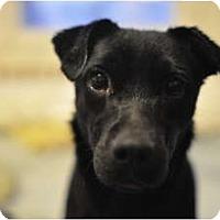 Adopt A Pet :: CoalPENDING - Toronto/Etobicoke/GTA, ON