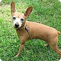 Adopt A Pet :: Cayenne - McDonough, GA