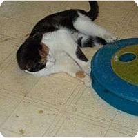Adopt A Pet :: Minnie - McDonough, GA