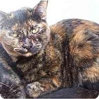 Adopt A Pet :: Phoebe - El Cajon, CA