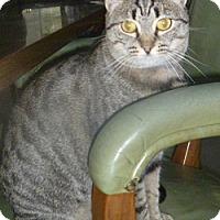 Adopt A Pet :: Cynthia - Hamburg, NY