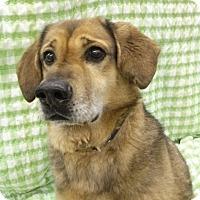 Adopt A Pet :: Simon - Lake Odessa, MI