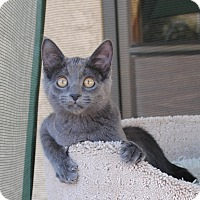 Adopt A Pet :: Hope - Palmdale, CA