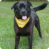 Adopt A Pet :: Juju - Mocksville, NC
