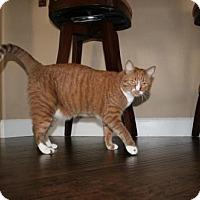 Adopt A Pet :: Zoe - Tustin, CA