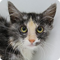 Adopt A Pet :: Ventura - Mission Viejo, CA