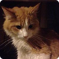 Adopt A Pet :: Red - East McKeesport, PA