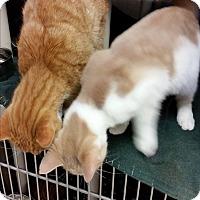 Adopt A Pet :: Fernand - Chippewa Falls, WI