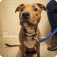 Adopt A Pet :: Buzz - New York, NY
