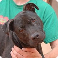 Adopt A Pet :: Bacardi - Las Vegas, NV