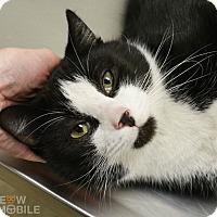 Adopt A Pet :: Merlin - Springfield, IL