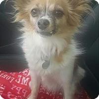 Adopt A Pet :: Ava - San Diego, CA