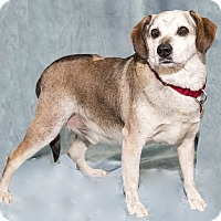 Hound (Unknown Type) Mix Dog for adoption in Mt. Prospect, Illinois - Magic