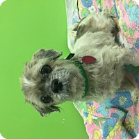 Adopt A Pet :: Oscar - Estherville, IA
