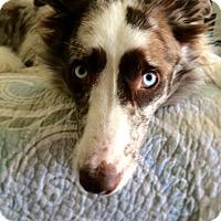 Adopt A Pet :: GUNNER - San Pedro, CA