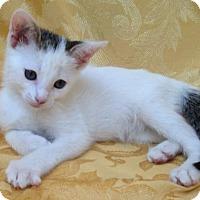 Adopt A Pet :: Manfred - Pembroke Pines, FL