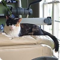Adopt A Pet :: Marmalade - Denver, NC