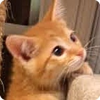 Adopt A Pet :: Calista - LaJolla, CA
