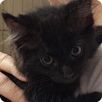 Adopt A Pet :: Ebony - Fresno, CA