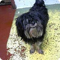 Adopt A Pet :: BENSON - Atlanta, GA