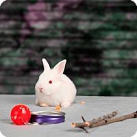 Adopt A Pet :: Hiccup - Marietta, GA