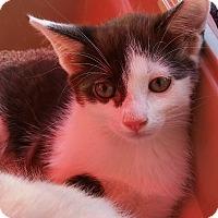 Adopt A Pet :: Yahoo - Woodland, CA