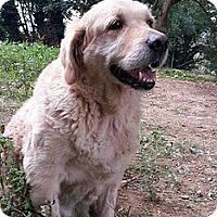 Adopt A Pet :: Harry - Washington, DC