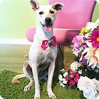 Adopt A Pet :: Davina - Castro Valley, CA