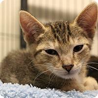 Adopt A Pet :: Griffin - Sarasota, FL