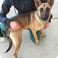 Adopt A Pet :: GIGI - Littleton, CO