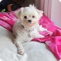 Adopt A Pet :: Tatum 3399 - Toronto, ON