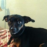 Adopt A Pet :: Parker Spruce - Holland, OH