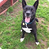 Adopt A Pet :: Taz - Chico, CA