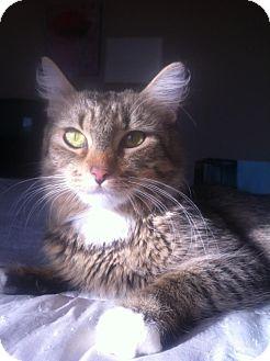 Peoria Az Cat Rescue