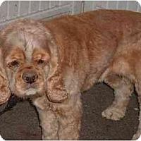 Adopt A Pet :: Pookie - Tacoma, WA
