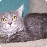 Adopt A Pet :: K-Angie1-Faith - Colorado Springs, CO