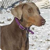 Adopt A Pet :: Rain--adopted!! - New Richmond, OH