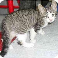 Adopt A Pet :: Kaylin - Jacksonville, FL