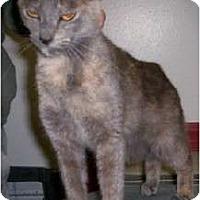 Adopt A Pet :: Chrissy - Chesapeake, VA