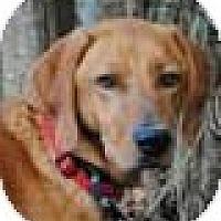 Adopt A Pet :: Finn - Jacksonville, FL