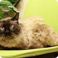 Adopt A Pet :: Morrison - Ennis, TX