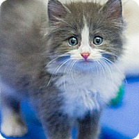 Adopt A Pet :: Hampton - Chicago, IL