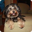 Adopt A Pet :: Jimmy Jax