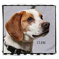 Adopt A Pet :: Clem - Warren, PA