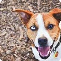 Adopt A Pet :: Noah - Peachtree City, GA